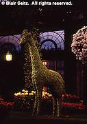 Topiary, Chrysanthemum Celebration, Longwood Gardens, Kennett Square, Chester Co., PA