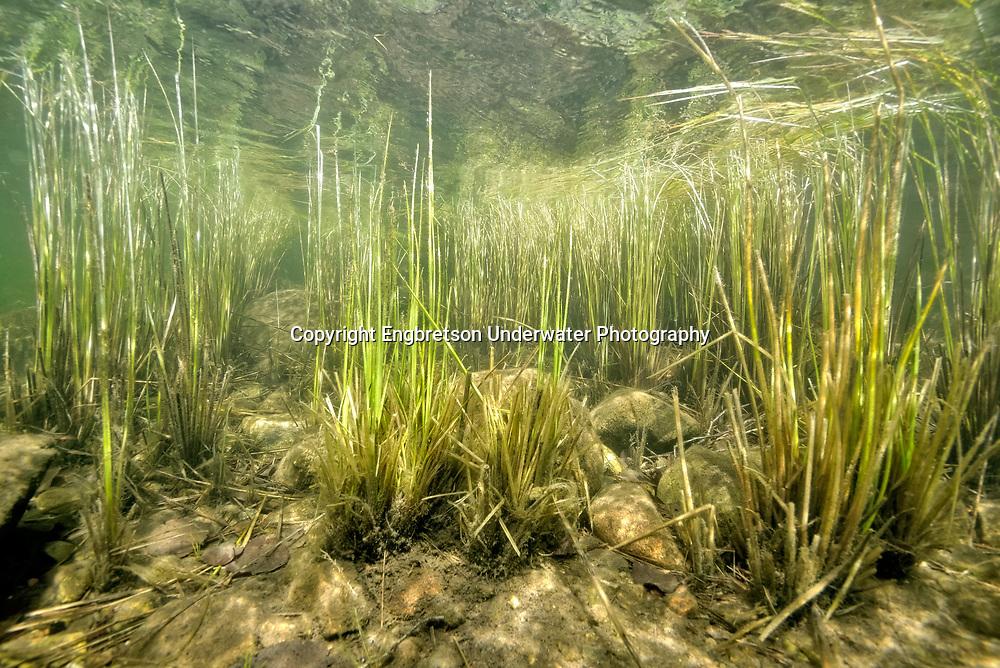 Underwater Scene<br /> <br /> Engbretson Underwater Photography