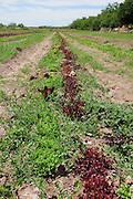 Agua Linda Farm, all natural, organic growers, Amado, Arizona, USA.