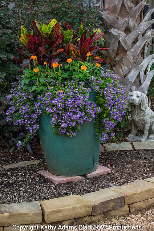 Container garden, lobelia, croton, Garden, Houston, late summer, Texas.