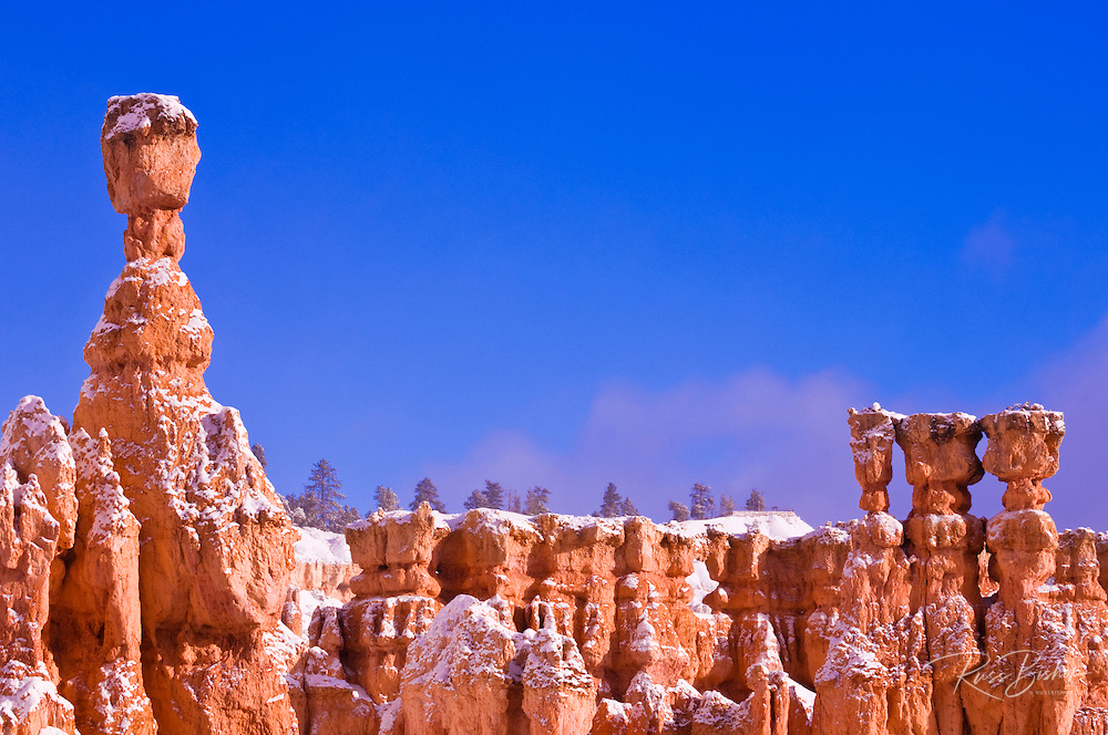 Morning light and fresh powder on Thor's Hammer and hoodoos below Sunrise Point, Bryce Canyon National Park, Utah