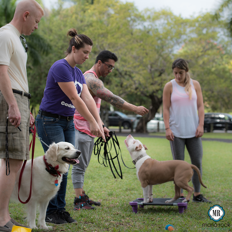 South Florida premier dog trainer, Cadence K-9 on location [photo credit @mrockphoto]