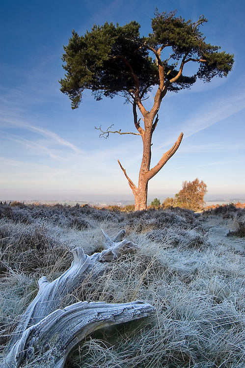The contrast of the warm sunlight and the morning frost bring this scene to life.