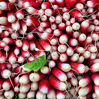Red and White Radishes at Outdoor Market in Fréjus, France