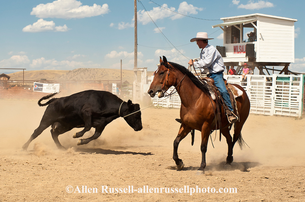Wilsall Ranch Rodeo, Montana, Wild Cow Milking, David Fryer, North Fork Raiders Team, MODEL RELEASED, PROPERTY RELEASED horse & rider