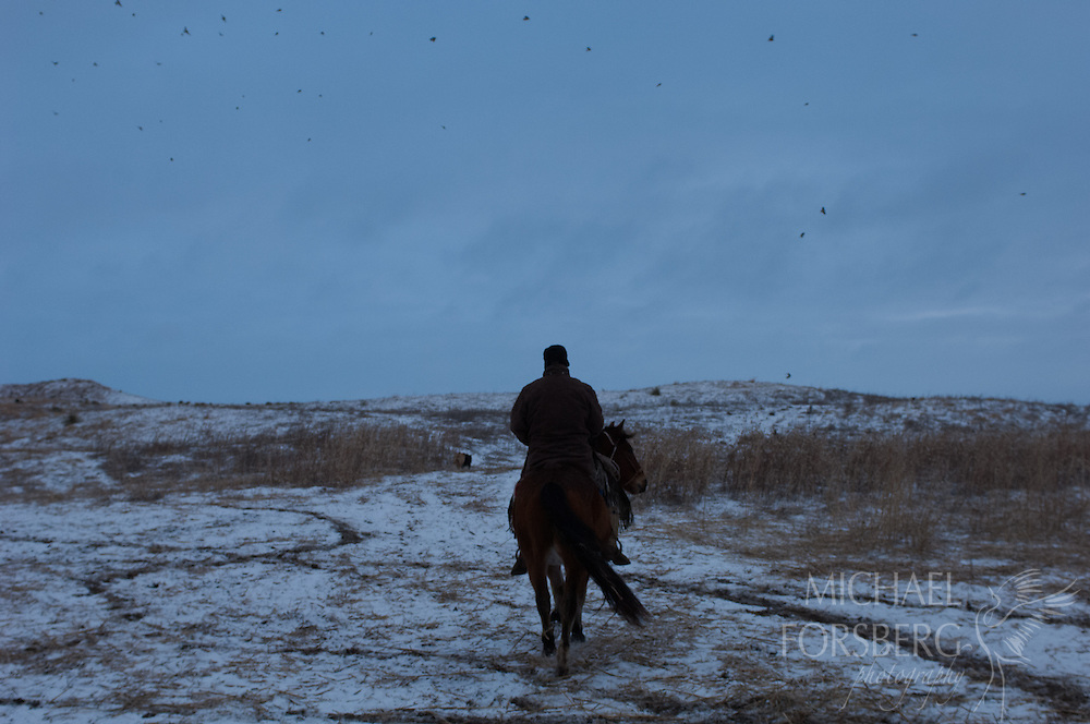 TNC HORSE CREEK FEN RANCH -<br /> CHERRY COUNTY<br /> SANDHILLS<br /> <br /> Shane Daniels heads out to check cattle on horseback at first light with flock of horned larks flying overhead.