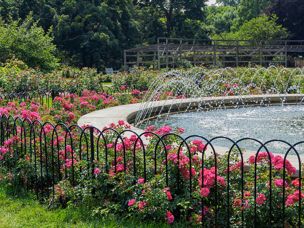 Fountain Surrounded By Pink Supreme Flower Carpet Roses Columbus