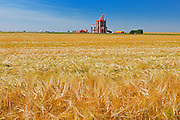 2_Row Barley and high throughput elevator<br /> Stirling<br /> Alberta<br /> Canada