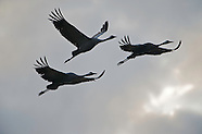 Cranes, Germany