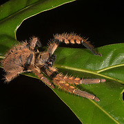 Borneo - Danum Valley - Invertebrates