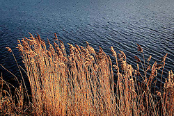 GERMANY SCHLESWIG HOLSTEIN SEHESTEDT 28DEC09 - Reeds and vegetation on the shore of the Kiel canal near Sehestedt, northern Germany...jre/Photo by Jiri Rezac..© Jiri Rezac 2009