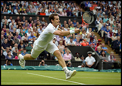 Wimbledon Tennis Championships.<br /> Andy Murray of Great Britain winning during the singles fourth round match with Spanish player Tommy Robredo at Centre Court on day 5 of The All England Lawn Tennis Club, Wimbledon, United Kingdom<br /> Friday, 28th June 2013<br /> Picture by Andrew Parsons / i-Images