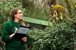 © Licensed to London News Pictures. 03/01/2013 London, UK. Keeper Kate Sanders with a Squirrel Monkey at the annual stocktake of every animal at London Zoo, Regents Park, London. The compulsory count is required as part of the zoo's licence and every creature, great or small will be accounted for..Photo credit : Simon Jacobs/LNP