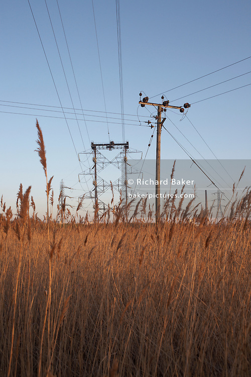 Local and nationwide electricity power lines merging with golden reed grasses on Botany Marshes, Swanscombe, Kent.