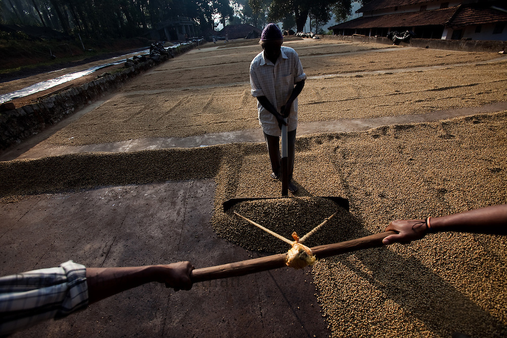 """Labourers dry coffee beans processed through """"Wet"""" process at a drying field in Coorg, India,  on Sunday January 31, 2010. Photographer: Prashanth Vishwanathan/Bloomberg News"""