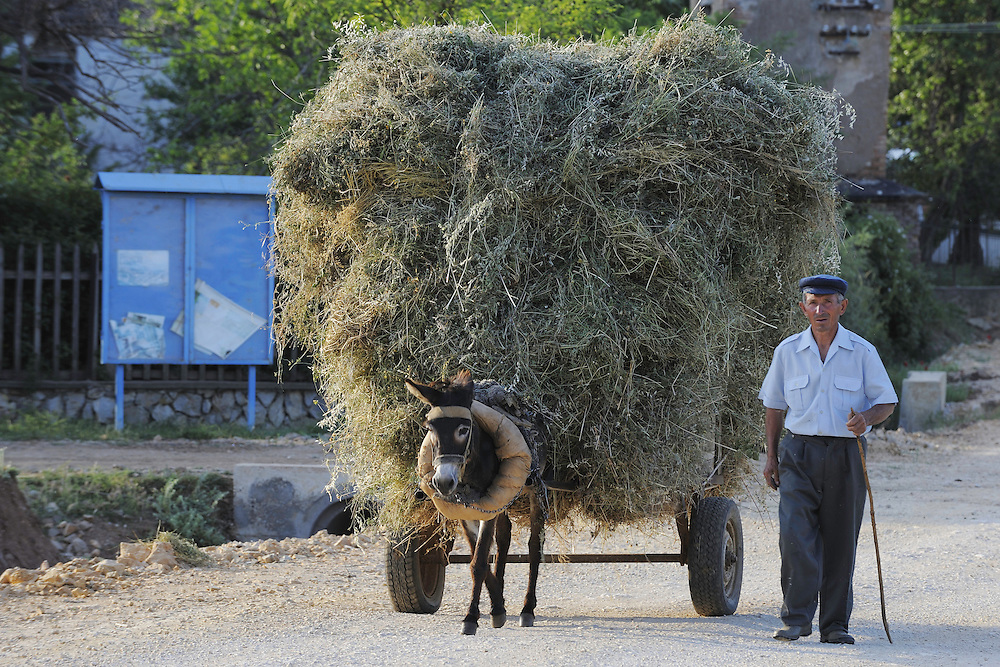 Hay-load. Lake Prespa National Park, Albania June 2009