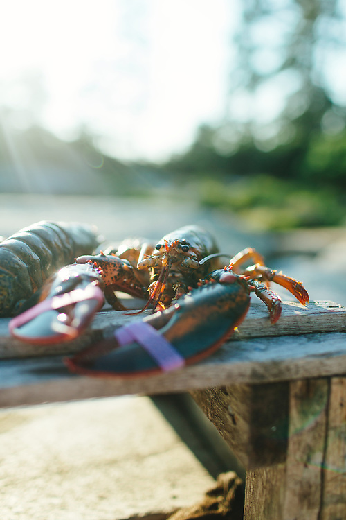 Lobster Outdoors