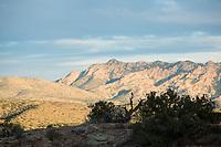 American Kestrel (Falco sparverius) Aravaipa Canyon Preserve, AZ.