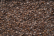 A field of coffee beans displaying a color characteristic of most medium-roasts.