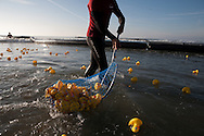Lifeguard Thomas Thomas [yes, his name is Thomas Thomas] collects floating rubber ducks during the Ducky Derby.  The first ducks to reach the shore won prizes for their donors.