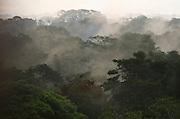 Canopy Scenic<br /> Yasuni National Park, Amazon Rainforest<br /> ECUADOR. South America