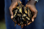 Mopti, the climate change minds also less fish for fishermen around Niger river.