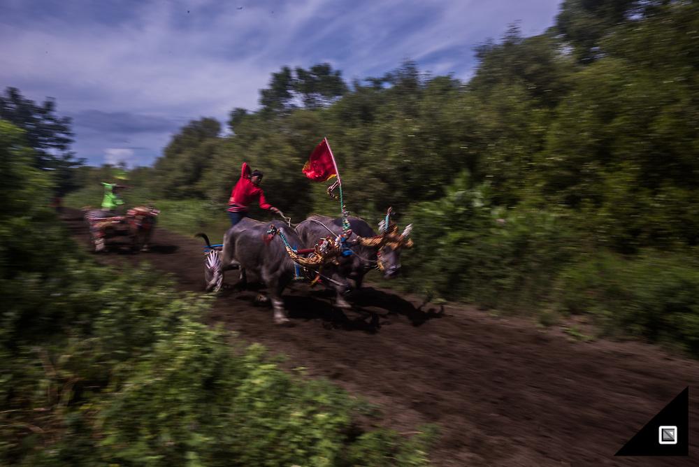 Indonesia - Bali - Makepung Bull Race