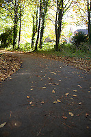 Empty path in Cabinteely Park Dublin Ireland with autumn trees