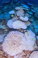 coral bleaching Maldives 2017,