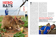 Tear sheet from Africa Geographic magazine of an article I researched, wrote and photographed on rats trained to sniff out landmines.