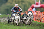 4 dog freight class competitor during the WSA Dryland World Championship 2019 at Firle Country Estate in the South Downs National Park, Lewes, Sussex, United Kingdom on 16 November 2019.