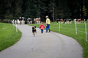 Twice a year, the cows in Switzerland are celebrated as they make their way to and from the alpine summer pastures. In Eggiwil in the Emmenthal district, the cows and goats of the Schenck family are cheered on as they make the three hour trek down from the mountain.