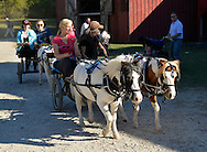 Old Bethpage, New York, U.S. 29th September 2013. People ride pony carts, one pulled by one pony, one drawn by two ponies, through the village street at The Long Island Fair. A yearly event since 1842, the county fair is now held at a reconstructed fairground at Old Bethpage Village Restoration.
