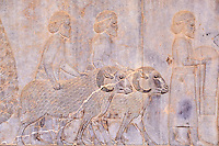 Iran, province du Fars, Persepolis, patrimoine mondial de l'UNESCO, la procession des tributaires // Iran, Fars Province, Persepolis, World Heritage of the UNESCO, procession of the tributaries