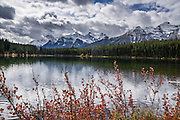 Peaks of the Bow Range reflect in Herbert Lake, Canadian Rockies, Banff National Park, Alberta, Canada. Foreground fall color foliage turns orange and yellow in mid September. Banff National Park is Canada's oldest national park, established in 1885, and is part of the Canadian Rocky Mountain Parks World Heritage Site declared by UNESCO in 1984.
