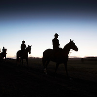 Racehorses At Dawn