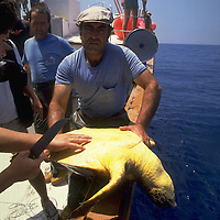 Turtle caught in Spanish longline, Mediterranean. Accession #: 0.89.121.003.15