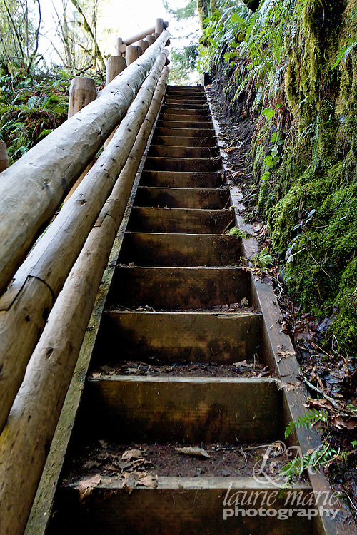 Stairs in the forest on the Shellburg Falls trail.