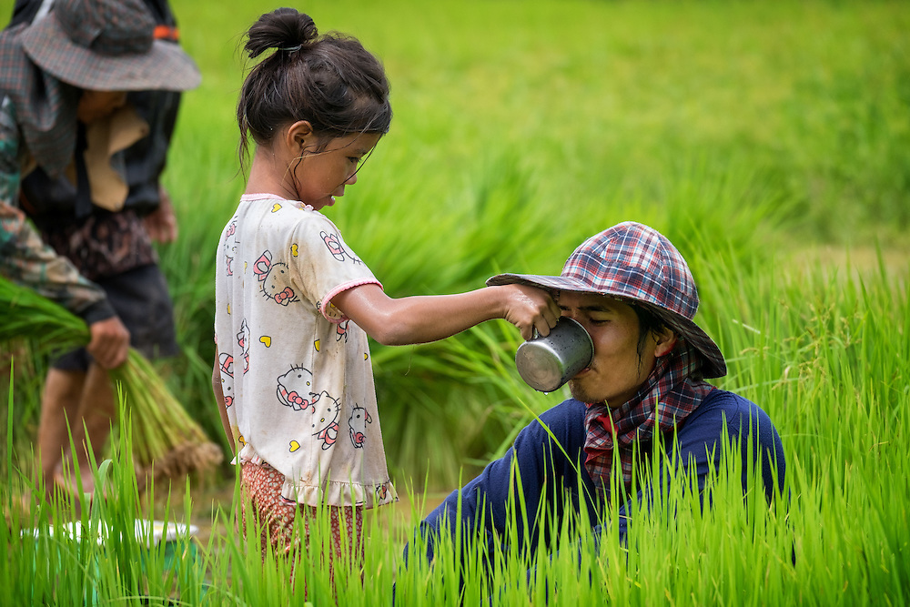Gammy, a young Thai girl gives her favorite uncle a drink of water in the rice fields this morning. Nakhon Nayok ‪Thailand‬ Aug 14, 2016. PHOTO BY LEE CRAKER