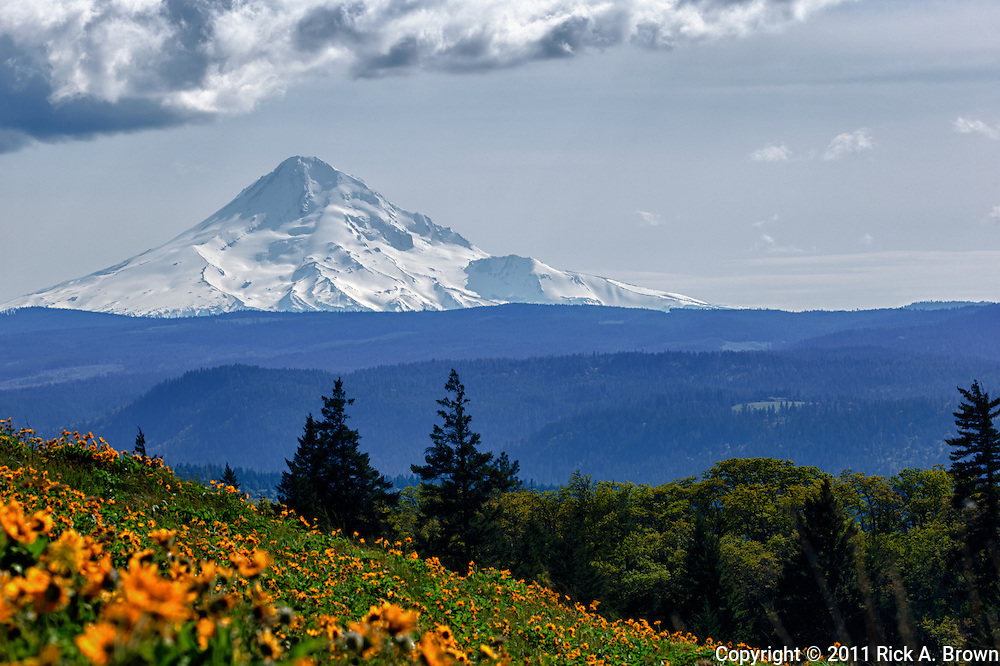 USA, Oregon, Columbia Gorge, Tom McCall Nature Preserve, Mt. Hood from McCall Point, Digital Composite, HDR