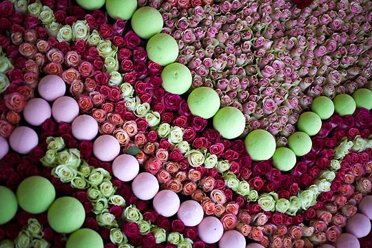 "World Record Flower ""Cupcake"" 35000 flowers, Grasse, France"