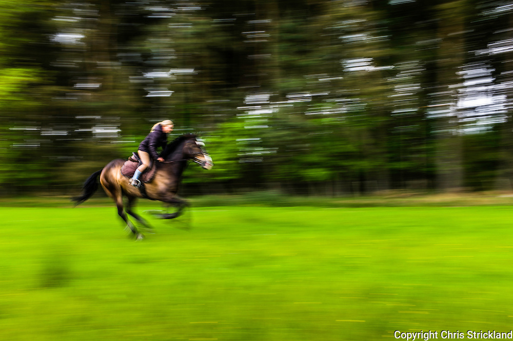 Ancrum, Jedburgh, Scotland, UK. 19th June 2015. Four Star eventer Emily Galbraith canters in a grass field next to woodland while exercising eventer 'Johnny' in the Scottish Borders.