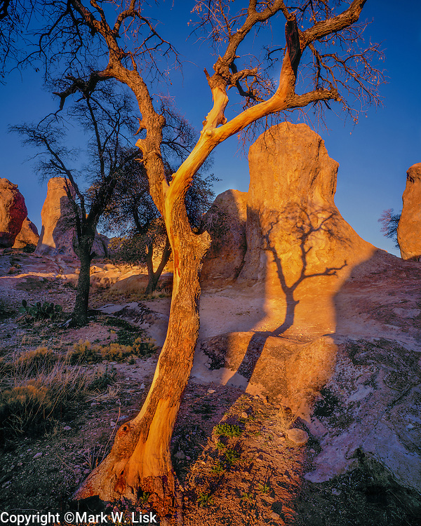Grey Oaks cast an erie shadow across the rocky landscape of City Of Rocks State Park in New Mexico.