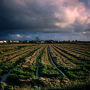 At the village of Carrasqueira, the lines in the crop field lead the eye to approaching storm clouds