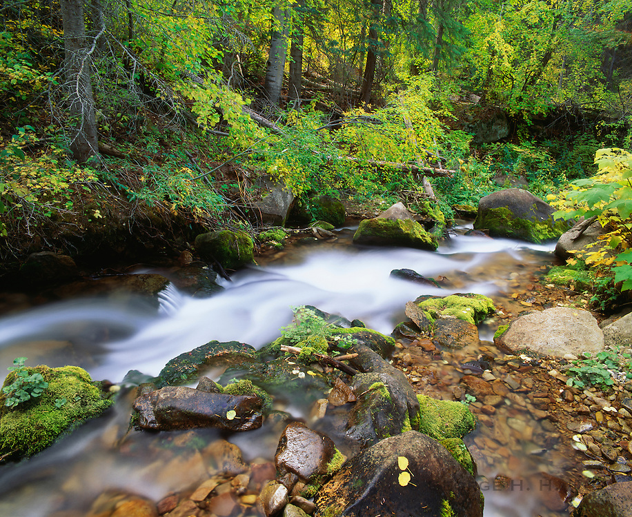 0340-1005 ~ Copyright: George H. H. Huey ~ Upper Mill Creek in early autumn. La Sal Mountains. Manti-La Sal National Forest, Utah.