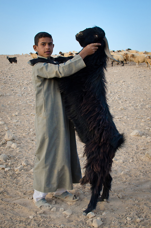 A bedouin boy dances with one of his family's goats.