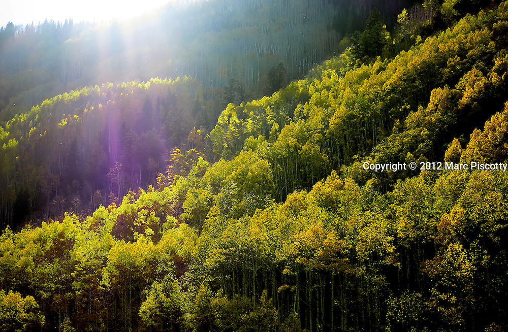 SHOT 9/29/12 4:59:51 PM - Aspen trees changing colors while mountain biking on the Reno Divide, Flag Creek and Deadman's Gulch in Crested Butte, Co. (Photo by Marc Piscotty / © 2012)