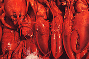 Some unfortunate lobsters on ice at the Seattle fish market.