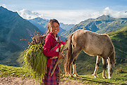 Young Quechua girl gathers grass with her horse in the Andes Mountains of Peru.