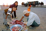 GOBI DESERT, MONGOLIA..08/29/2001.Tzochorinam, gers belonging to the family of wealthy camel herder and local hero Chimiddorj. Sheep being slaughtered in honour of guests..(Photo by Heimo Aga).